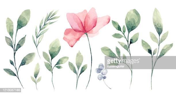 illustrazioni stock, clip art, cartoni animati e icone di tendenza di set of watercolor flower and green leaves - tecnica illustrativa