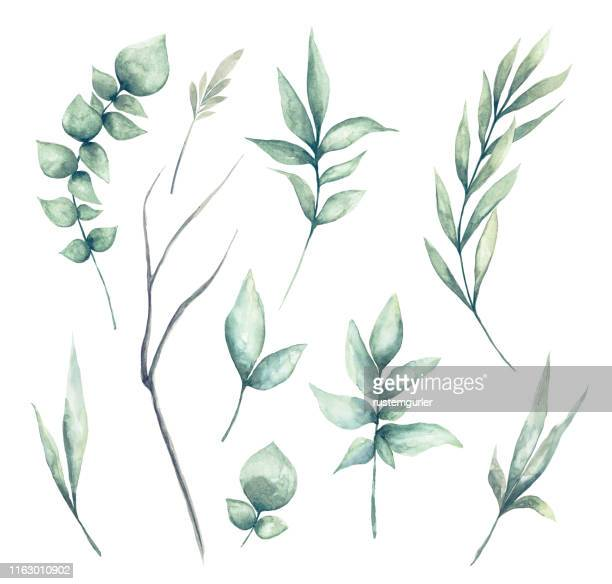 set of watercolor green leaves clipart - flower stock illustrations