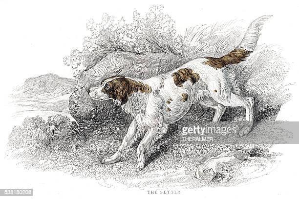 ilustraciones, imágenes clip art, dibujos animados e iconos de stock de setter perro grabado 1840 - galgo