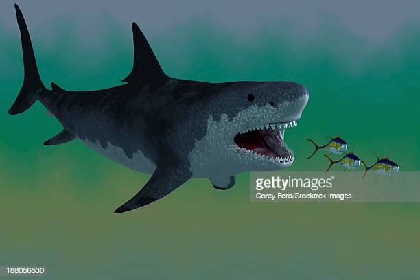 Several Tuna fish try to escape from a huge Megalodon shark in prehistoric times.