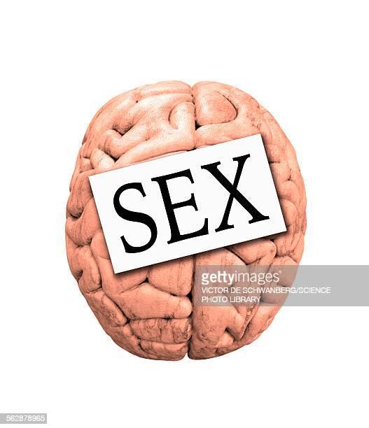 sex on the brain - capital letter stock illustrations