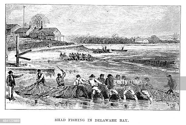 shad fishing in delaware bay - delaware bay stock illustrations, clip art, cartoons, & icons