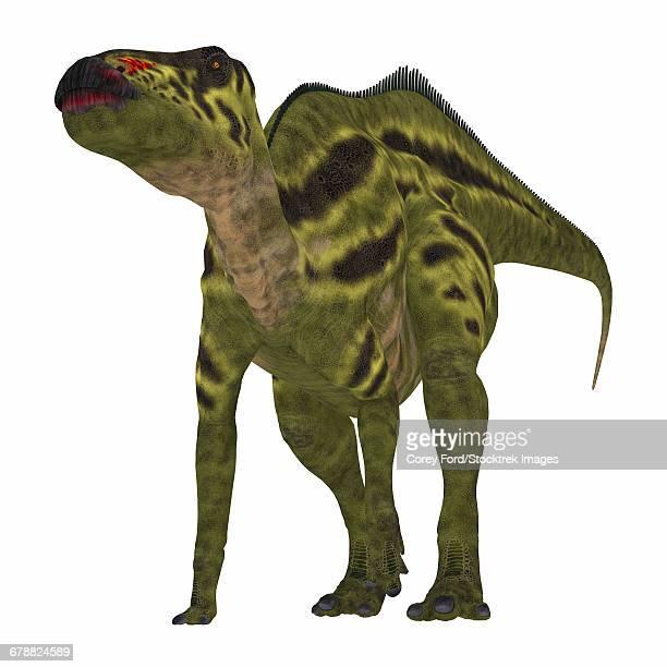 Shantungosaurus dinosaur on white background.
