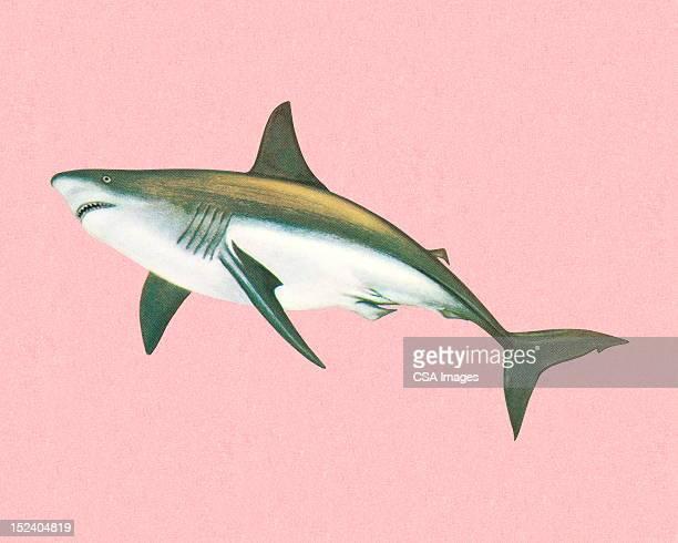 illustrations, cliparts, dessins animés et icônes de requin - requin
