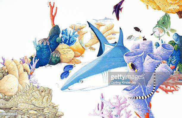 shark on ocean bed, surrounded by marine life - angelfish stock illustrations, clip art, cartoons, & icons