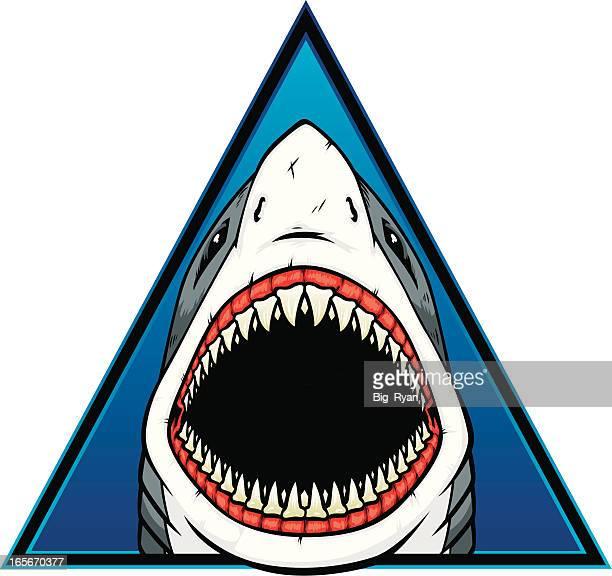サメの三角形