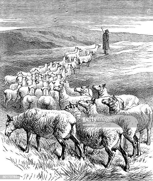 shepherd with a flock of sheep - sheep stock illustrations, clip art, cartoons, & icons