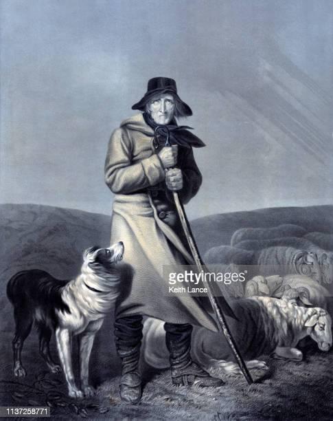 shepherd with his sheep and dog - australian shepherd herding stock illustrations