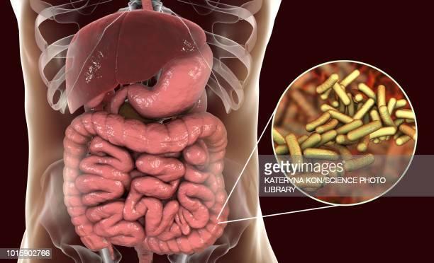 shigellosis, illustration - micro organism stock illustrations, clip art, cartoons, & icons