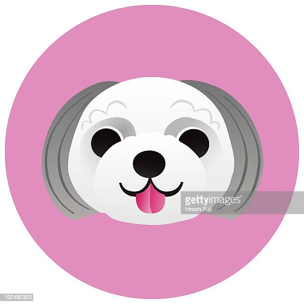 A Shih Tzu on a pink circular background