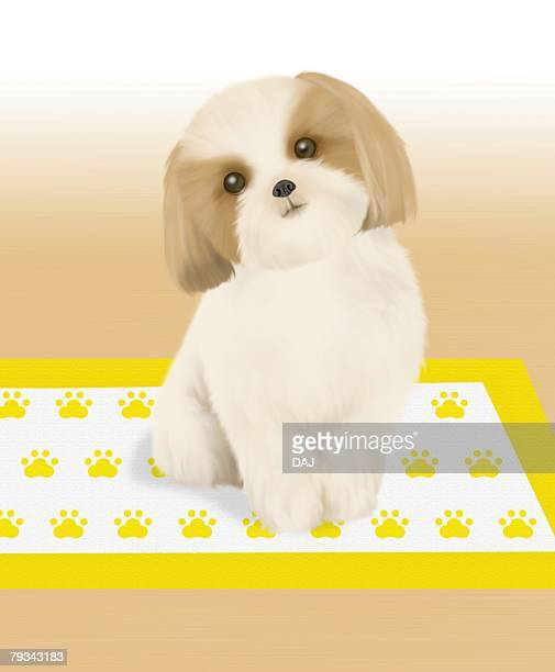 Shih Tzu sitting on mat, front view