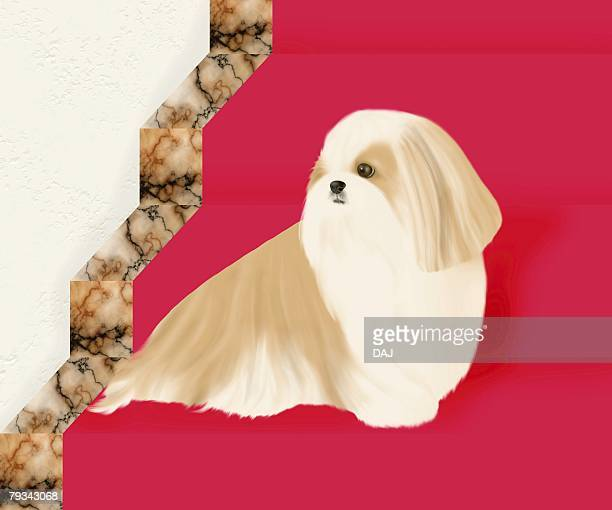 Shih Tzu sitting on stairs, side view