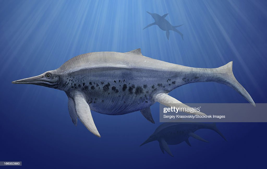 Shonisaurus popularis swimming in prehistoric waters. : stock illustration