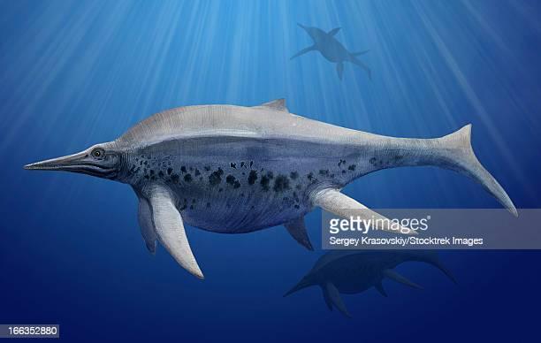 Shonisaurus popularis swimming in prehistoric waters.