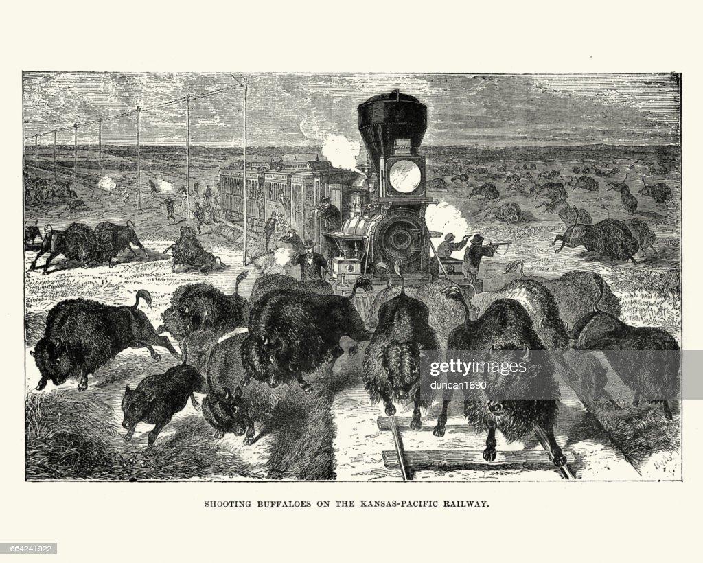 Shooting buffaloes on the Kansas Pacific Railway, 19th Century : stock illustration