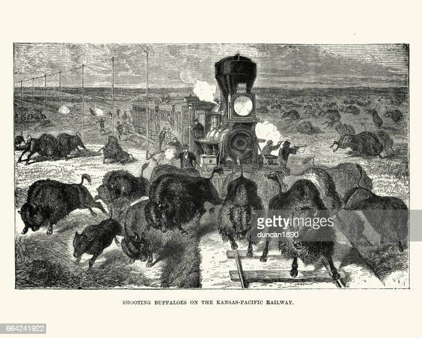 Shooting buffaloes on the Kansas Pacific Railway, 19th Century
