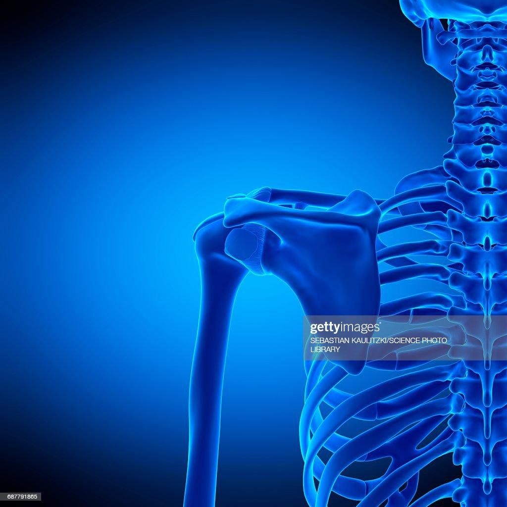 Shoulder Ligaments Illustration Stock Illustration Getty Images