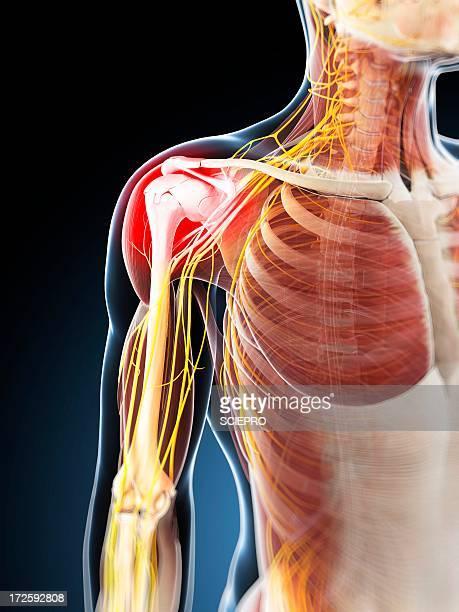 ilustrações, clipart, desenhos animados e ícones de shoulder pain, conceptual artwork - ombro
