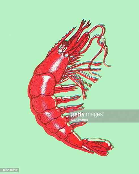 ilustrações, clipart, desenhos animados e ícones de camarão - camarões