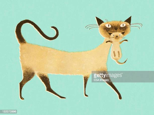 Siamese Cat With Kitten