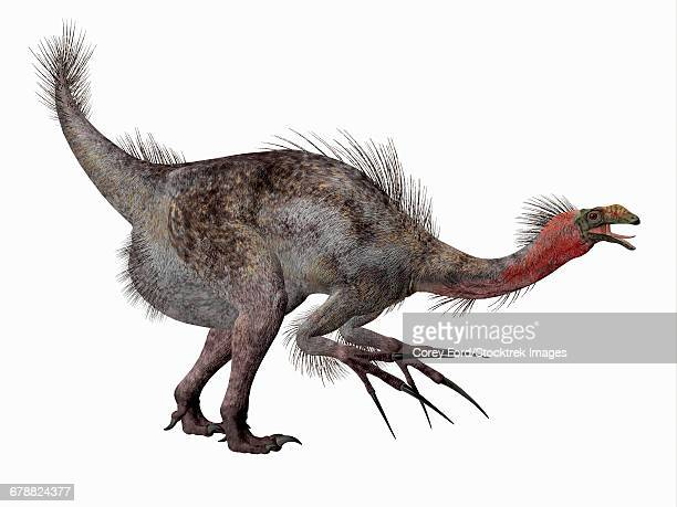 side profile of a therizinosaurus dinosaur. - talon stock illustrations