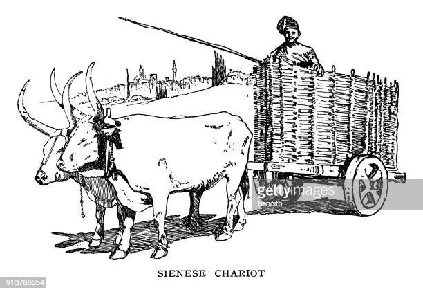 sienese chariot - wild cattle stock illustrations, clip art, cartoons, & icons