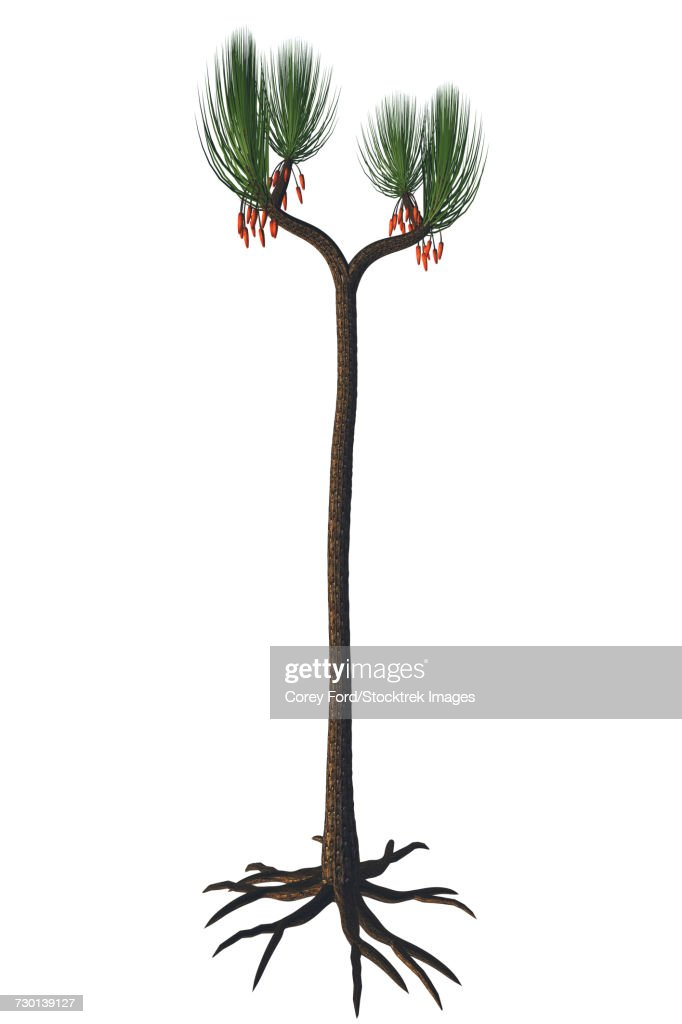 Sigillaria tree from the Late Carboniferous period. : stock illustration
