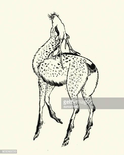 illustrations, cliparts, dessins animés et icônes de cerf sika, (cervus nippon) - estampe japonaise