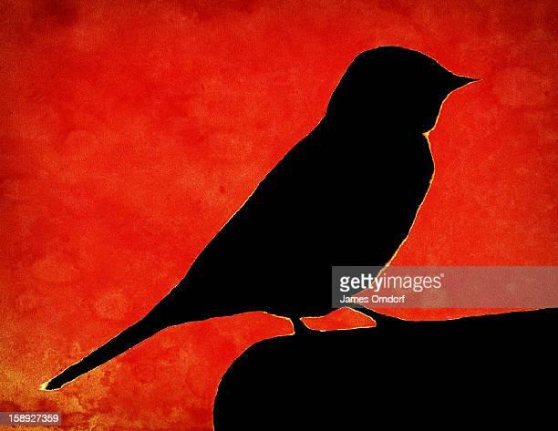 A silhouette of a bird