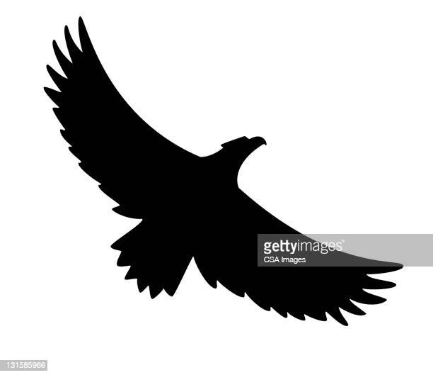 silhouette of flying bird - bald eagle stock illustrations