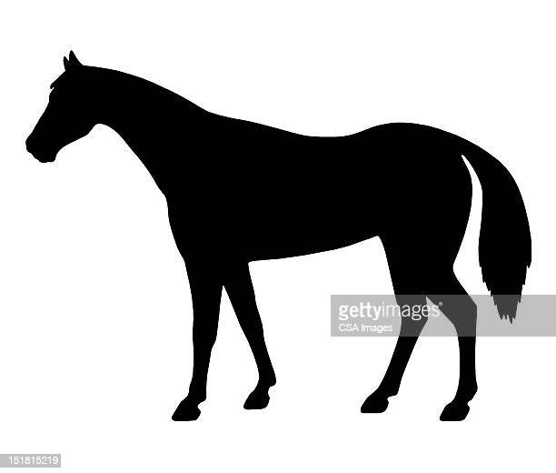 silhouette of horse - horse stock illustrations