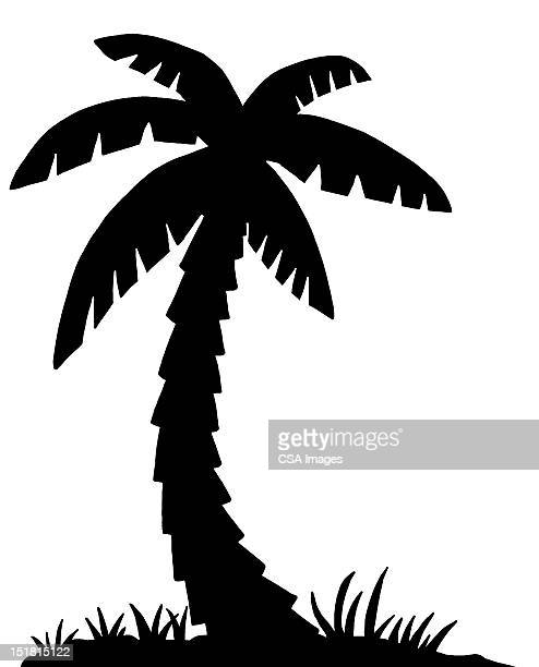 silhouette of palm tree - pacific islands stock illustrations