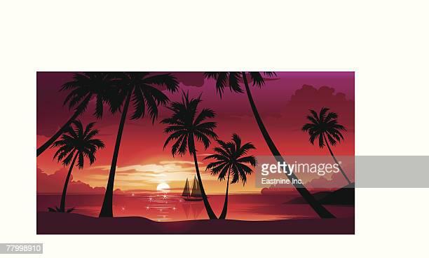 ilustraciones, imágenes clip art, dibujos animados e iconos de stock de silhouette of palm trees at sunset - vista de ángulo bajo