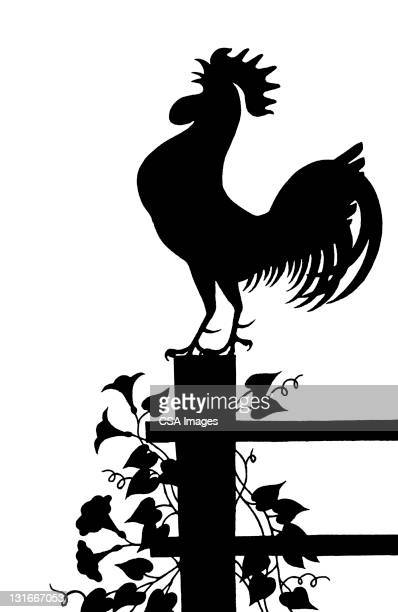 silhouette of rooster on fence - vine stock illustrations