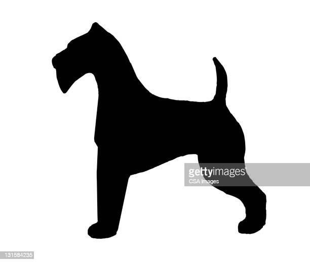 Silhouette of Schnauzer Dog