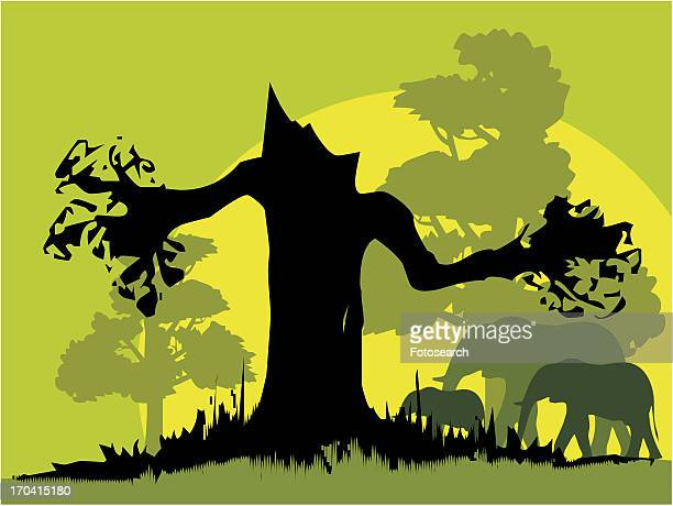Silhouette of tree and elephants
