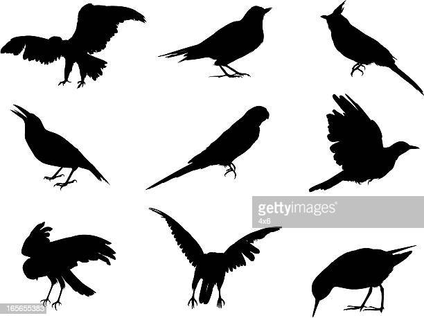 silhouettes of various birds - quail bird stock illustrations, clip art, cartoons, & icons