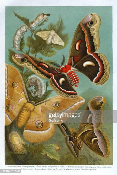 silk moth with caterpillar illustration - graphic print stock illustrations
