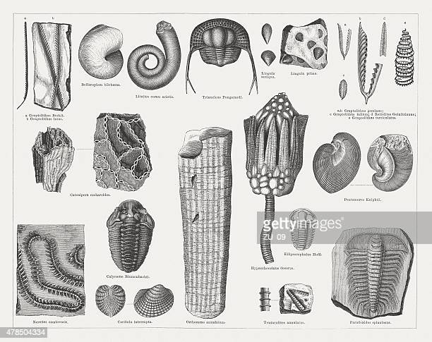 Silurian fossils, wood engravings, published in 1878