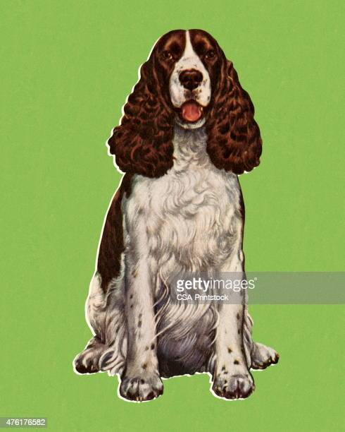 sitting dog - spaniel stock illustrations
