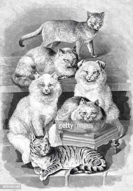 ilustrações, clipart, desenhos animados e ícones de seis diferentes raça de gatos - oriental shorthair