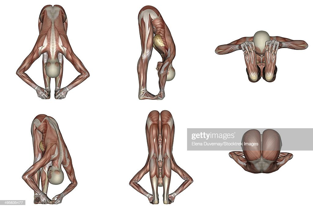 Six different views of big toes yoga pose showing female musculature, white background. : stock illustration