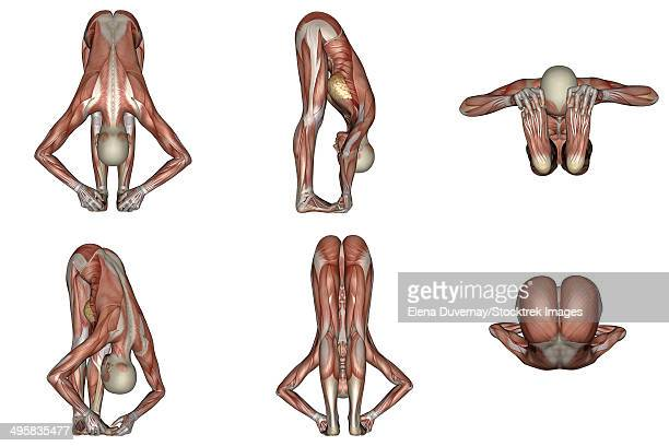 six different views of big toes yoga pose showing female musculature, white background. - touching toes stock illustrations, clip art, cartoons, & icons
