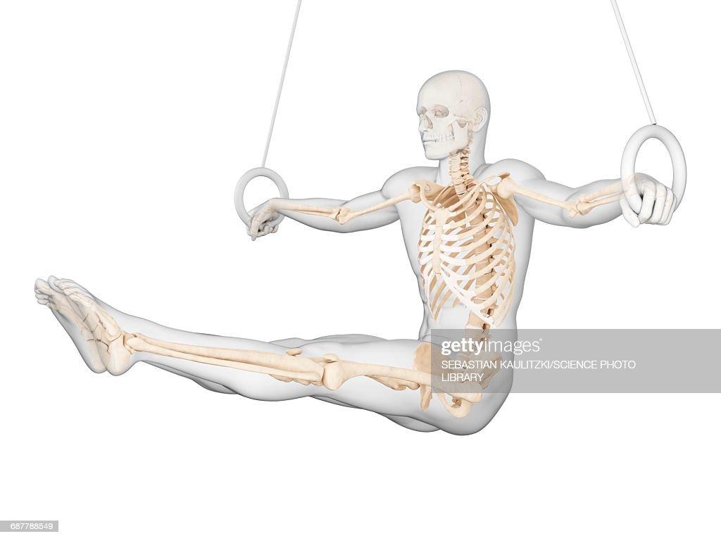 Skeletal Structure Of Athlete Illustration Stock Illustration