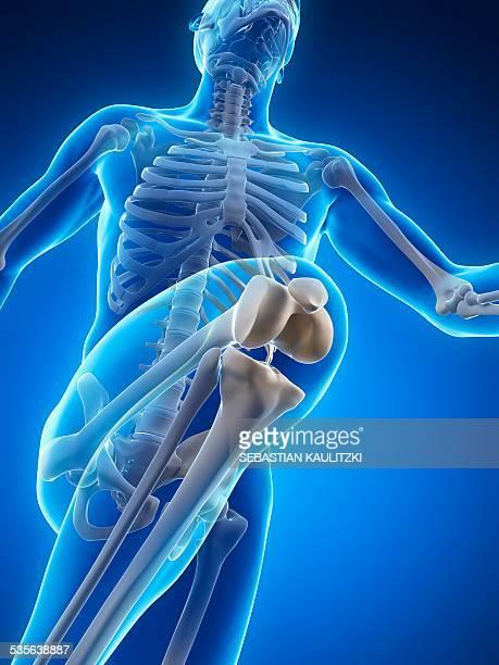Skeletal system of runner, artwork
