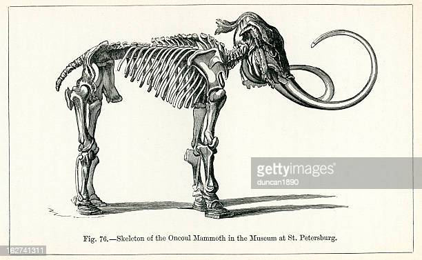 Skeleton of the Oncoul Mammoth