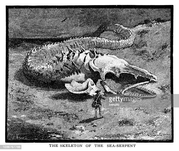 skeleton of the sea serpent monster - rotting stock illustrations, clip art, cartoons, & icons