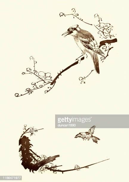 illustrations, cliparts, dessins animés et icônes de croquis d'oiseaux sur braches, art japonais, 19ème siècle - estampe japonaise