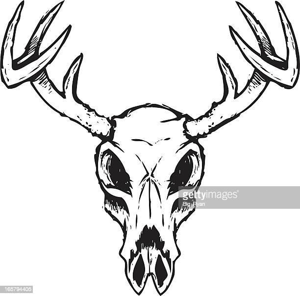 sketchy deer skull