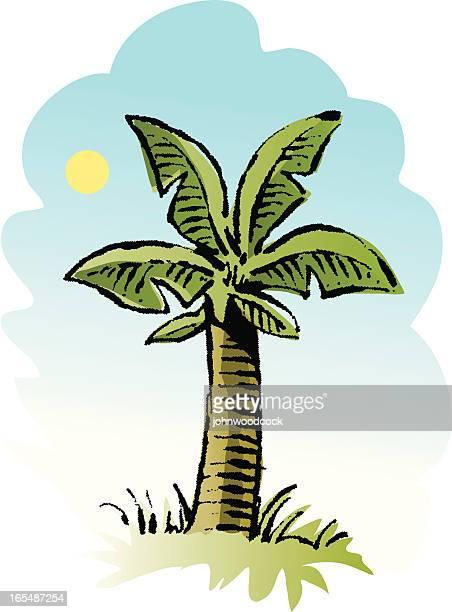 Sketchy palm tree.